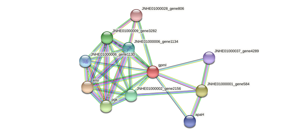 gpmI protein (Pseudomonas oleovorans) - STRING interaction network