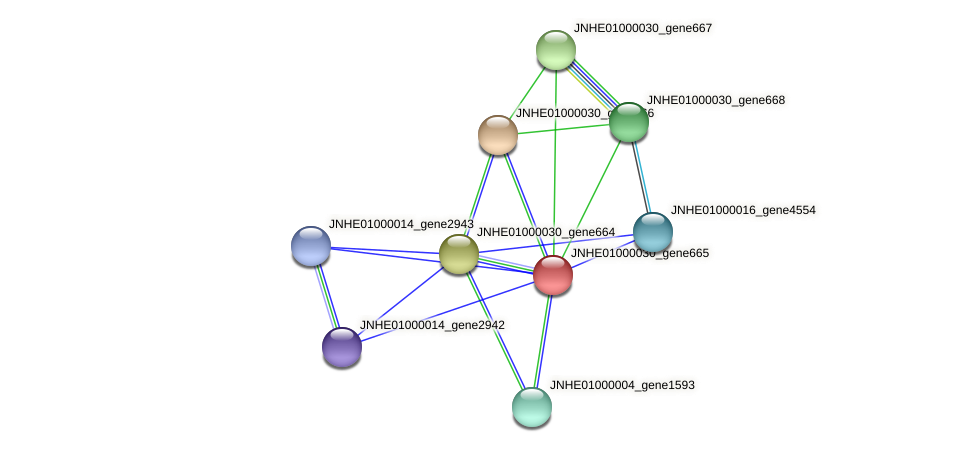 JNHE01000030_gene665 protein (Pseudomonas oleovorans) - STRING interaction network
