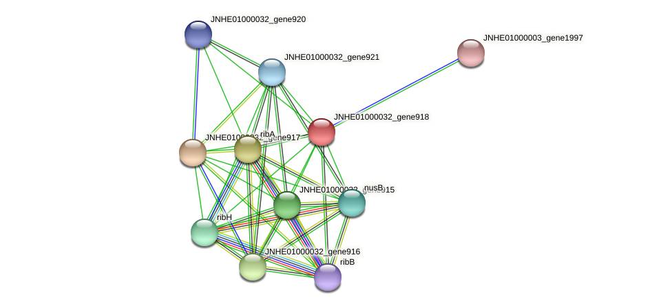 JNHE01000032_gene918 protein (Pseudomonas oleovorans) - STRING interaction network
