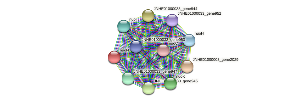 nuoN protein (Pseudomonas oleovorans) - STRING interaction network