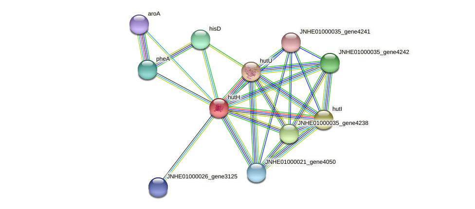 hutH protein (Pseudomonas oleovorans) - STRING interaction network