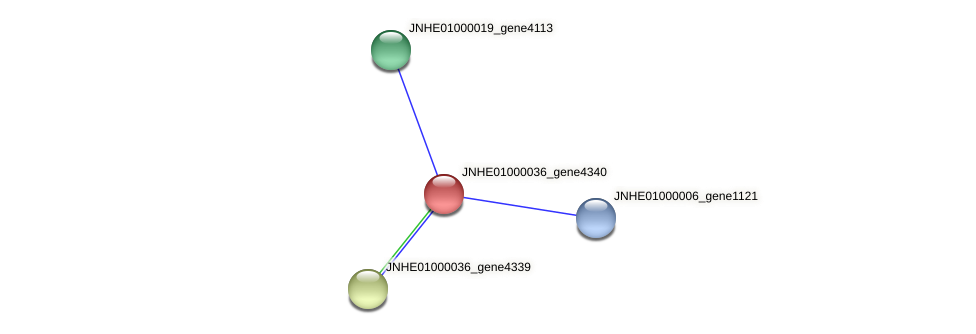 JNHE01000036_gene4340 protein (Pseudomonas oleovorans) - STRING interaction network
