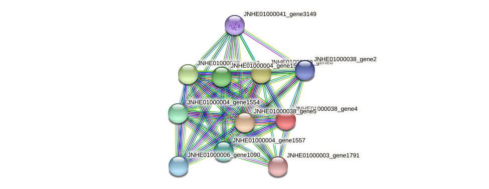 JNHE01000038_gene4 protein (Pseudomonas oleovorans) - STRING interaction network