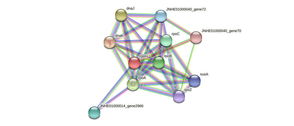 rpoH protein (Pseudomonas oleovorans) - STRING interaction network