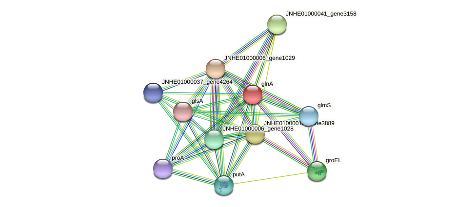 JNHE01000041_gene3155 protein (Pseudomonas oleovorans) - STRING interaction network