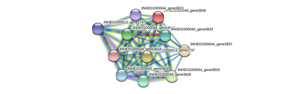 JNHE01000044_gene3836 protein (Pseudomonas oleovorans) - STRING interaction network