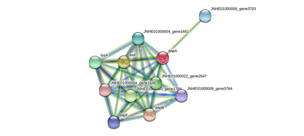 dapA protein (Pseudomonas oleovorans) - STRING interaction network