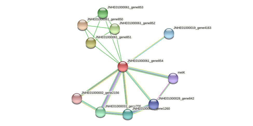 JNHE01000061_gene854 protein (Pseudomonas oleovorans) - STRING interaction network
