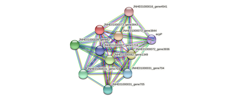 JNHE01000073_gene3843 protein (Pseudomonas oleovorans) - STRING interaction network