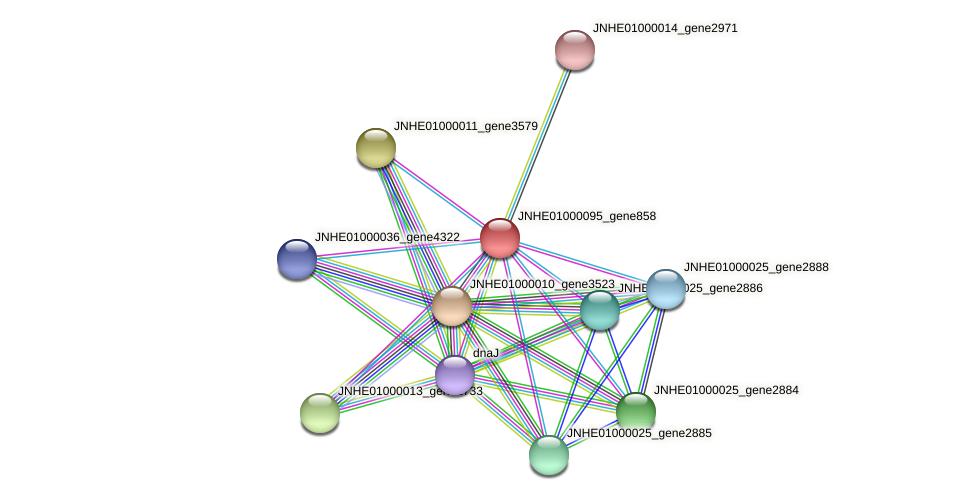 JNHE01000095_gene858 protein (Pseudomonas oleovorans) - STRING interaction network