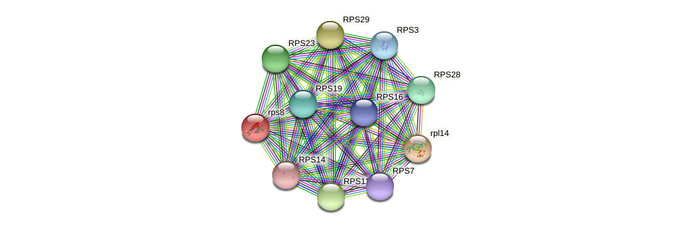 rps8 protein (Chlamydomonas reinhardtii) - STRING interaction network