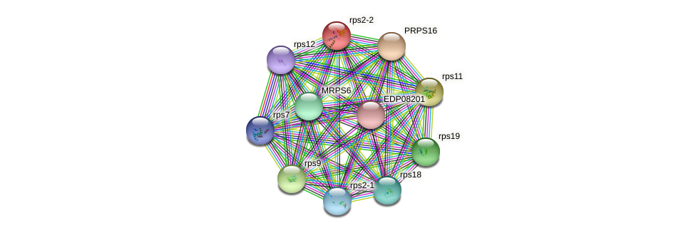 rps2-2 protein (Chlamydomonas reinhardtii) - STRING interaction network