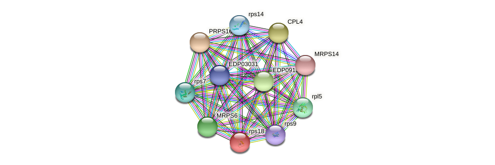 rps18 protein (Chlamydomonas reinhardtii) - STRING interaction network
