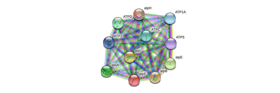 atpF protein (Chlamydomonas reinhardtii) - STRING interaction network