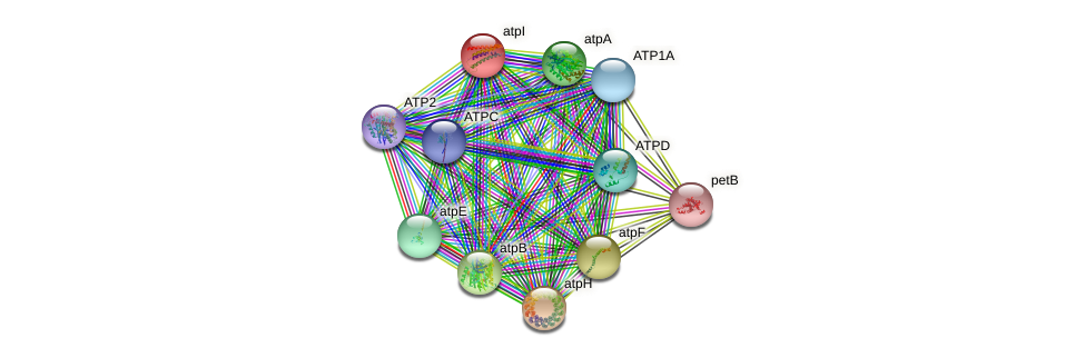atpI protein (Chlamydomonas reinhardtii) - STRING interaction network