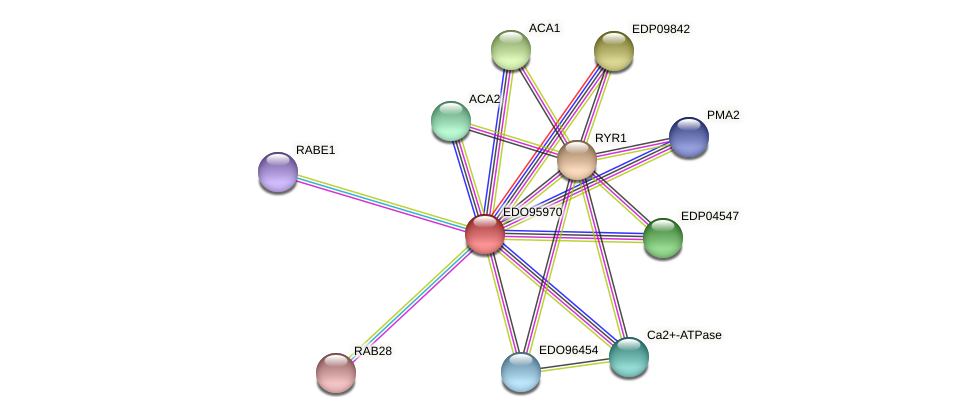 EDO95970 protein (Chlamydomonas reinhardtii) - STRING interaction network