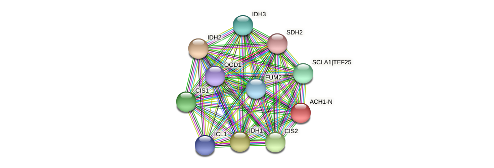 ACH1-N protein (Chlamydomonas reinhardtii) - STRING interaction network