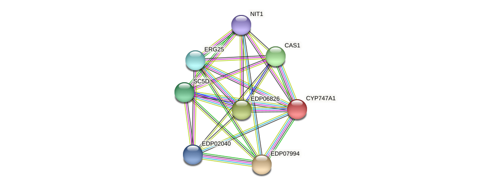 CYP747A1 protein (Chlamydomonas reinhardtii) - STRING interaction network