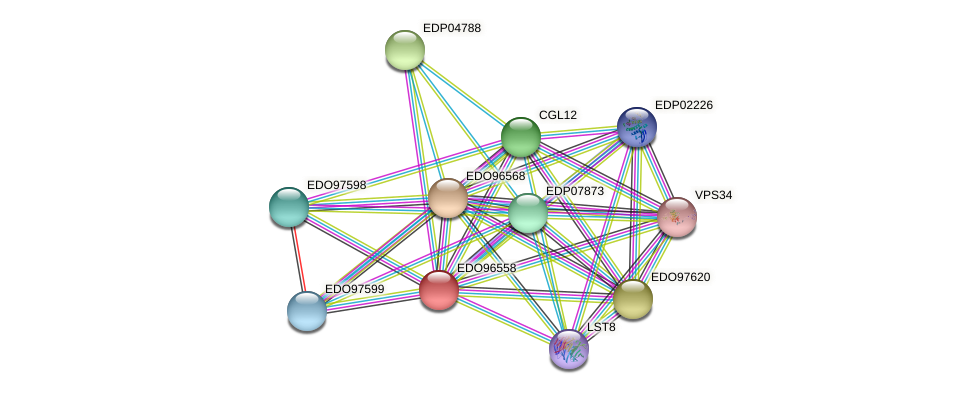 EDO96558 protein (Chlamydomonas reinhardtii) - STRING interaction network