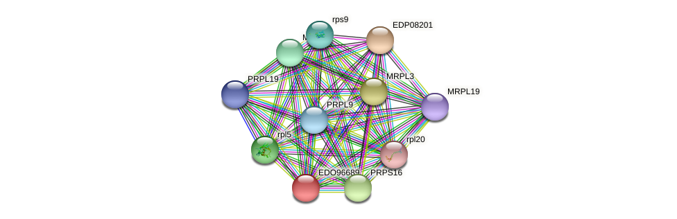 EDO96689 protein (Chlamydomonas reinhardtii) - STRING interaction network