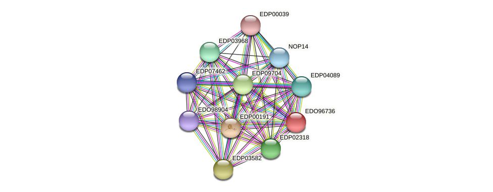EDO96736 protein (Chlamydomonas reinhardtii) - STRING interaction network
