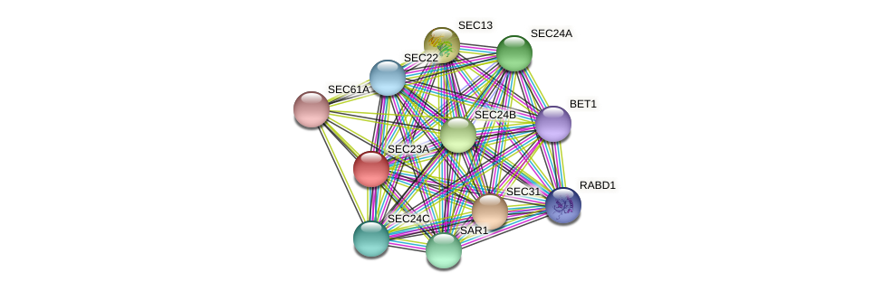 SEC23A protein (Chlamydomonas reinhardtii) - STRING interaction network