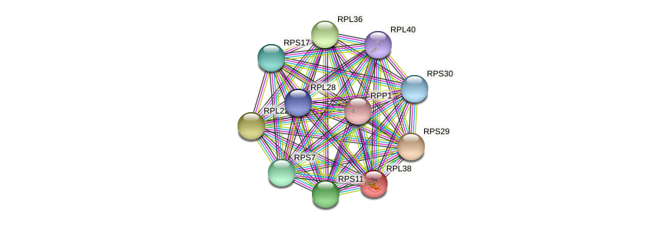 RPL38 protein (Chlamydomonas reinhardtii) - STRING interaction network