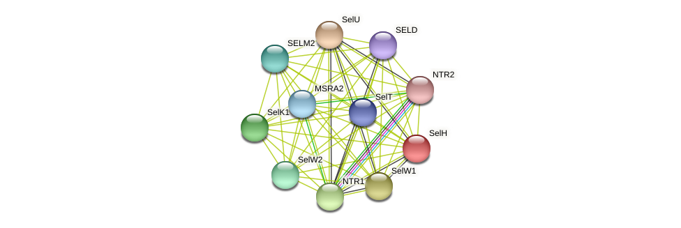 SelH protein (Chlamydomonas reinhardtii) - STRING interaction network