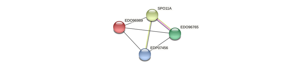 EDO96989 protein (Chlamydomonas reinhardtii) - STRING interaction network