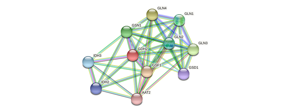 GDH2 protein (Chlamydomonas reinhardtii) - STRING interaction network