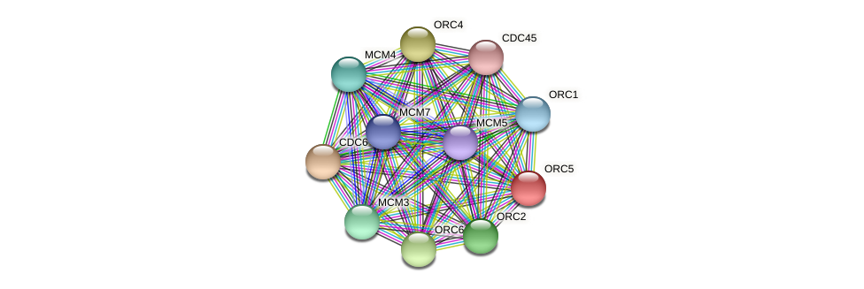 ORC5 protein (Chlamydomonas reinhardtii) - STRING interaction network