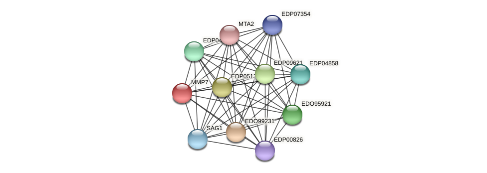 MMP7 protein (Chlamydomonas reinhardtii) - STRING interaction network