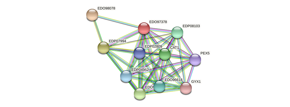 EDO97378 protein (Chlamydomonas reinhardtii) - STRING interaction network