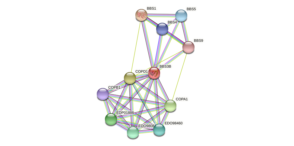 BBS3B protein (Chlamydomonas reinhardtii) - STRING interaction network