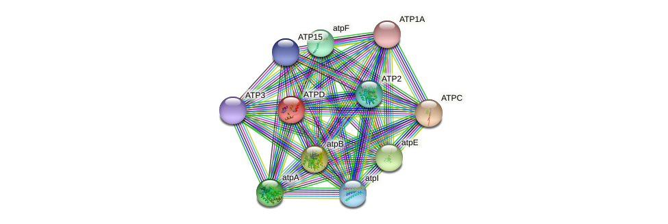 ATPD protein (Chlamydomonas reinhardtii) - STRING interaction network