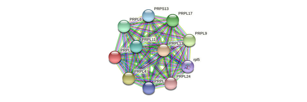 PRPL3 protein (Chlamydomonas reinhardtii) - STRING interaction network