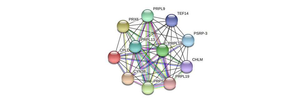 CPLD31 protein (Chlamydomonas reinhardtii) - STRING interaction network