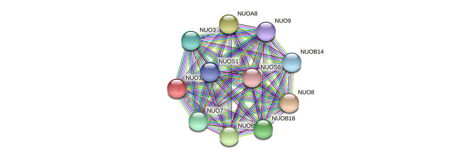 NUO10 protein (Chlamydomonas reinhardtii) - STRING interaction network