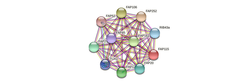 FAP115 protein (Chlamydomonas reinhardtii) - STRING interaction network