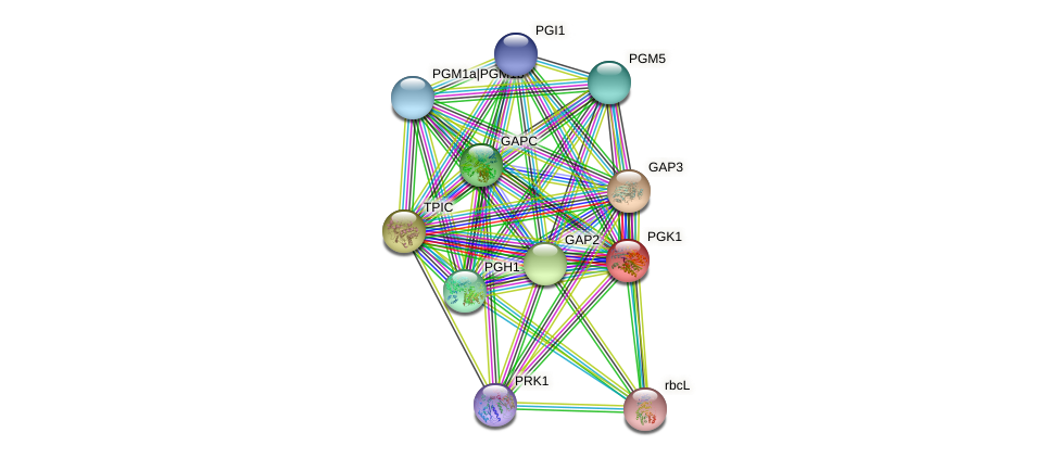 PGK1 protein (Chlamydomonas reinhardtii) - STRING interaction network