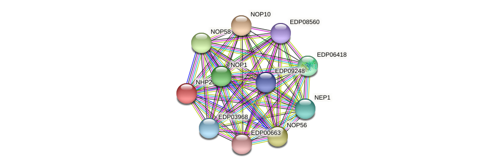 NHP2 protein (Chlamydomonas reinhardtii) - STRING interaction network
