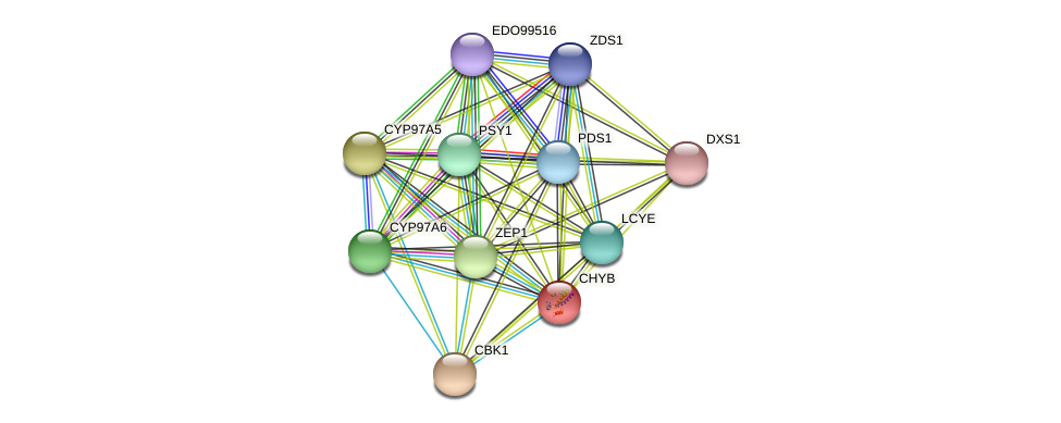 CHYB protein (Chlamydomonas reinhardtii) - STRING interaction network