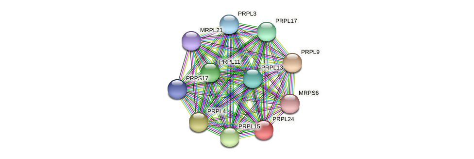 PRPL24 protein (Chlamydomonas reinhardtii) - STRING interaction network