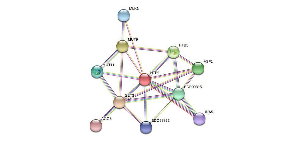 EDO99534 protein (Chlamydomonas reinhardtii) - STRING interaction network