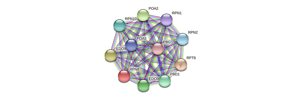 RPN8 protein (Chlamydomonas reinhardtii) - STRING interaction network