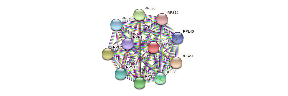 RPL21 protein (Chlamydomonas reinhardtii) - STRING interaction network