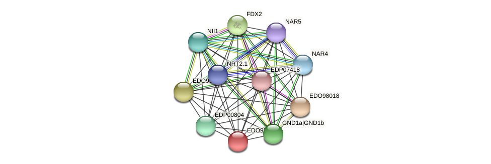 EDO99798 protein (Chlamydomonas reinhardtii) - STRING interaction network