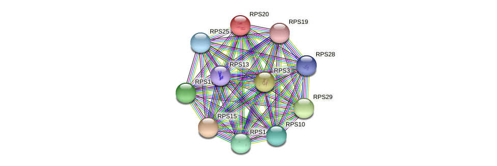RPS20 protein (Chlamydomonas reinhardtii) - STRING interaction network