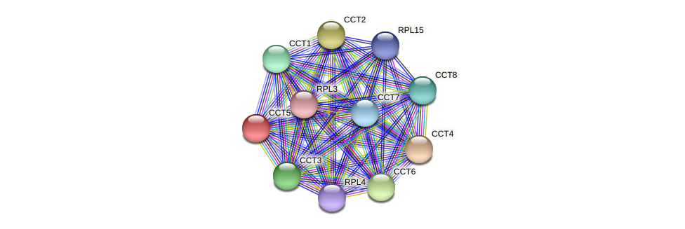 CCT5 protein (Chlamydomonas reinhardtii) - STRING interaction network