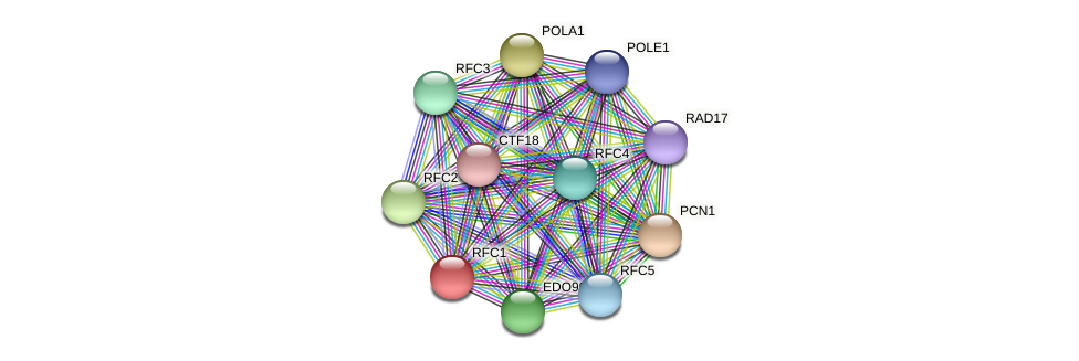 RFC1 protein (Chlamydomonas reinhardtii) - STRING interaction network